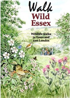 The Butterflies of Essex: cover illustration by David Corke